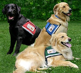 Therapy Dogs in the Emergency Department